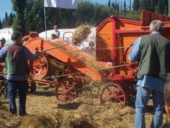 L 39 antica battitura del grano for Da dove proviene il grano della barilla